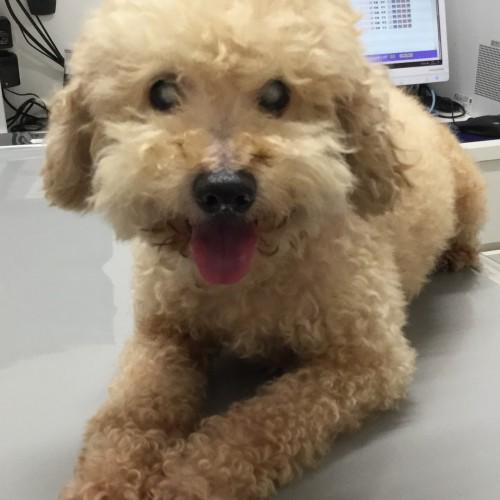 2017.9.28 井上さん保護犬3