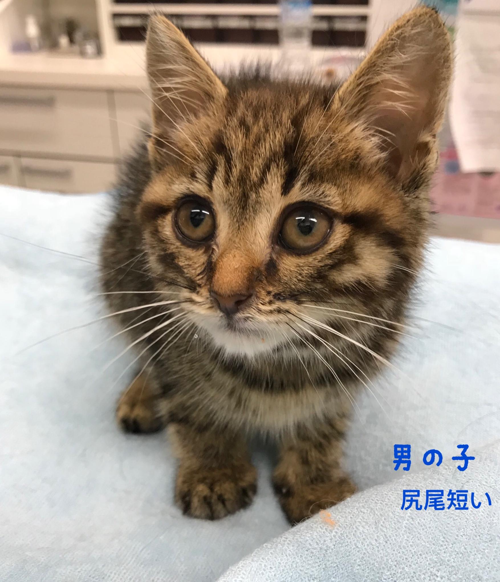 2018.06.30 高岡キジ♂