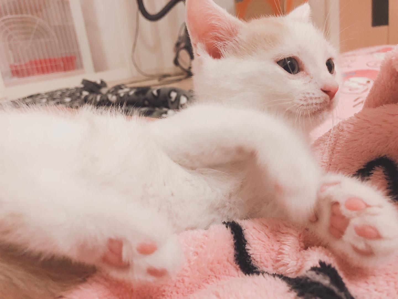 2019.5.18岩田ミリア子猫(柄大2)