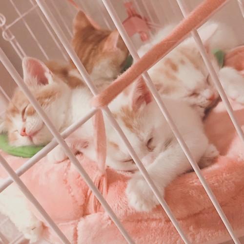 2019.5.18岩田ミリア子猫