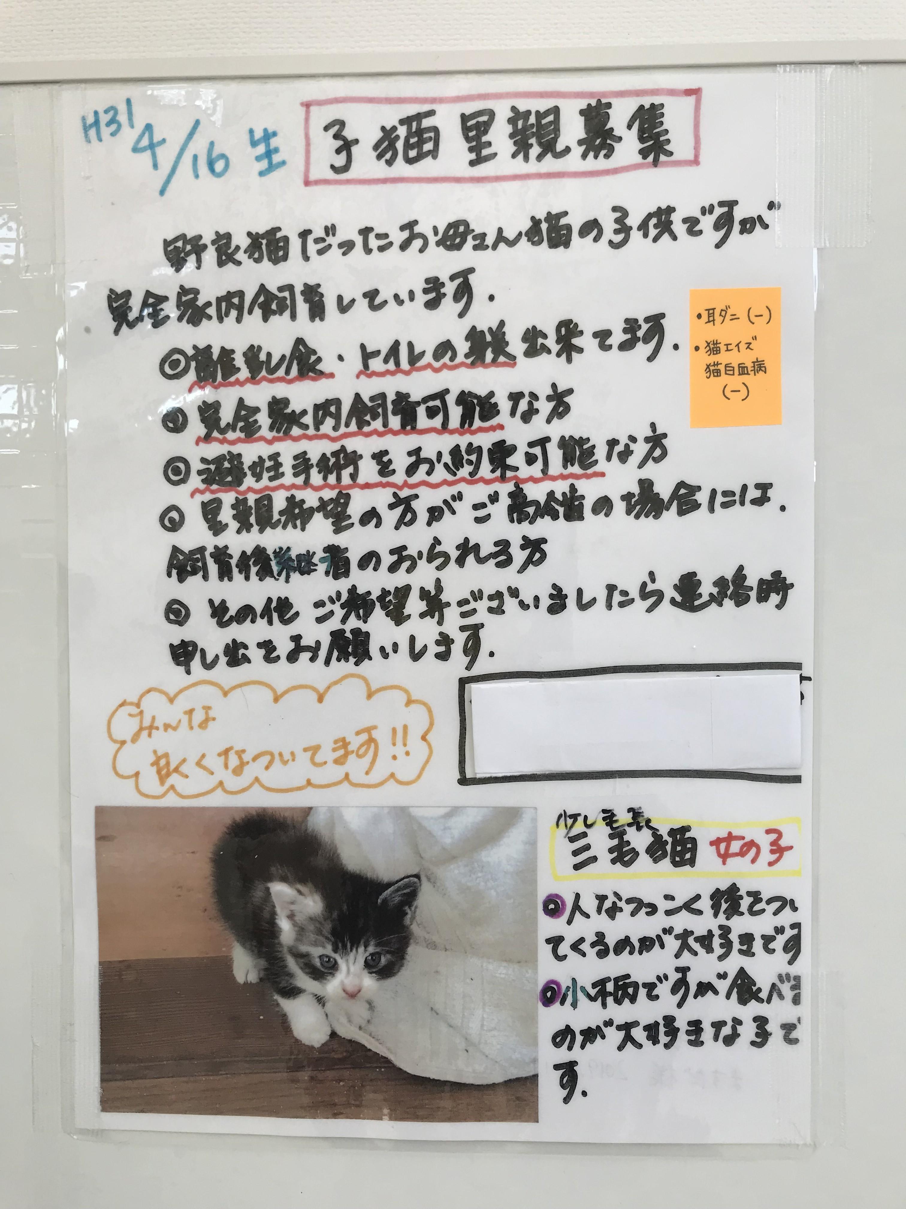 〈2243〉増田ノラネコ里親探し